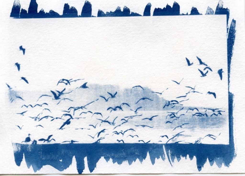 cyano ( oiseaux - 10x15